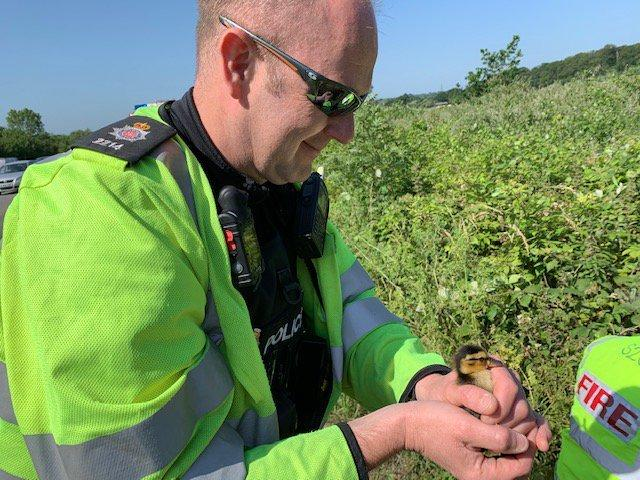 Surrey Road Police save the ducks