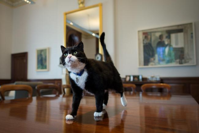 Chief mouser Palmerston at the Foreign Office