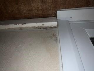 Surrey Comet: Damp seen in Kyla Reddick's Kingston council flat
