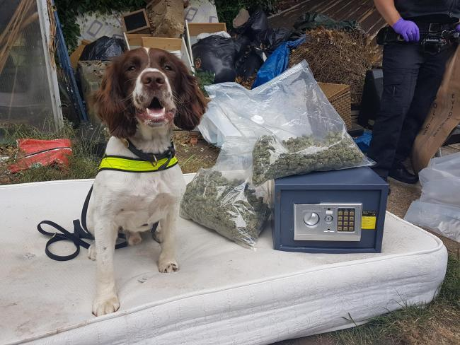 "Police seize ""large amount"" of cannabis and money from an address in West Palace Gardens. Image: Surrey Police"