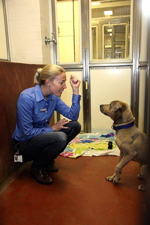 Claire Porteous, operations manager with Milo, Shar-Pei cross