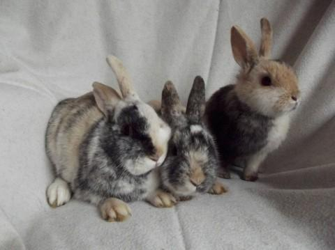 Recovering well: Rabbits found dumped near Chessington