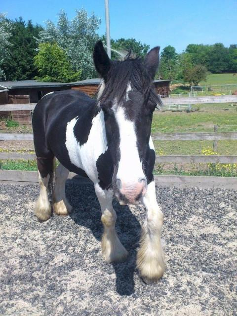 Missing pony owner offers reward for their safe return