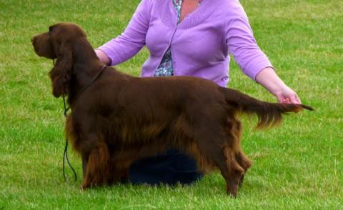 Harvey is entering Crufts for the third year running