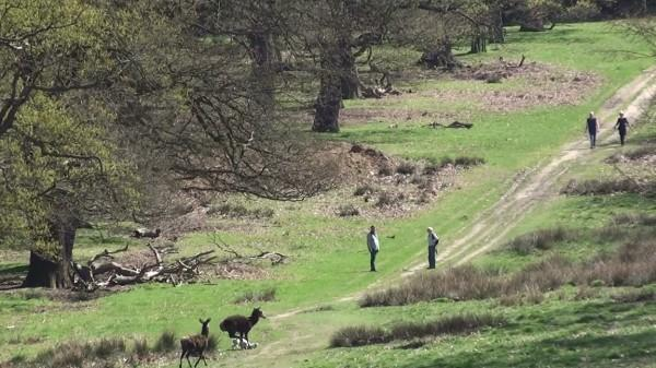 Richmond Park borders Kingston - but where would a smaller open space go in the borough?