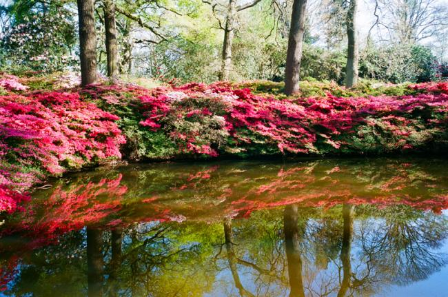 The still Pond Isabella Plantation Richmond Park