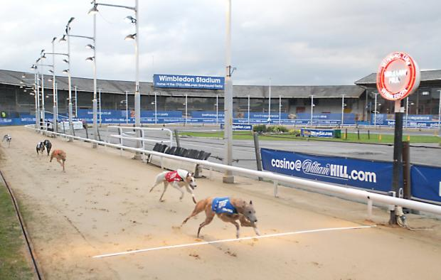 Greyhound racing in Wimbledon