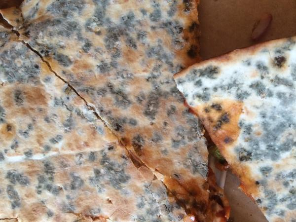Revolting: Mr Hewett's pizza was covered in green mould