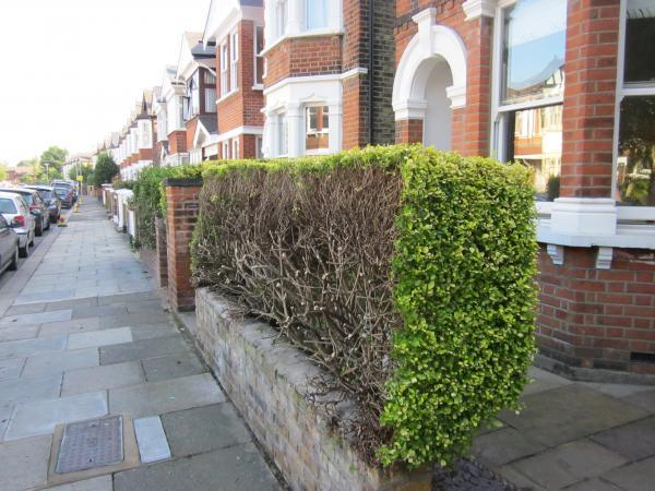 These hedges were cut down in Burton Road