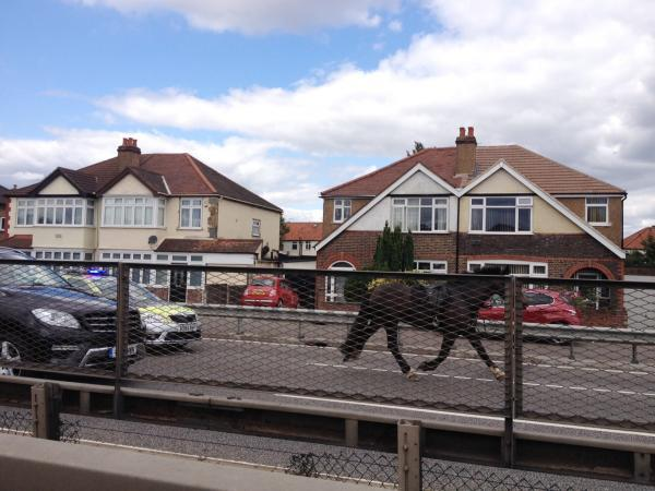 The runaway horse was pursued along the A3 by police. Image: Carrie Clarke