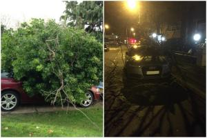 Storm Imogen: Cars hit by fallen trees in New Malden and Tolworth
