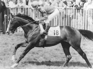 Surrey Comet: MISSING: Shergar was kidnapped in 1983