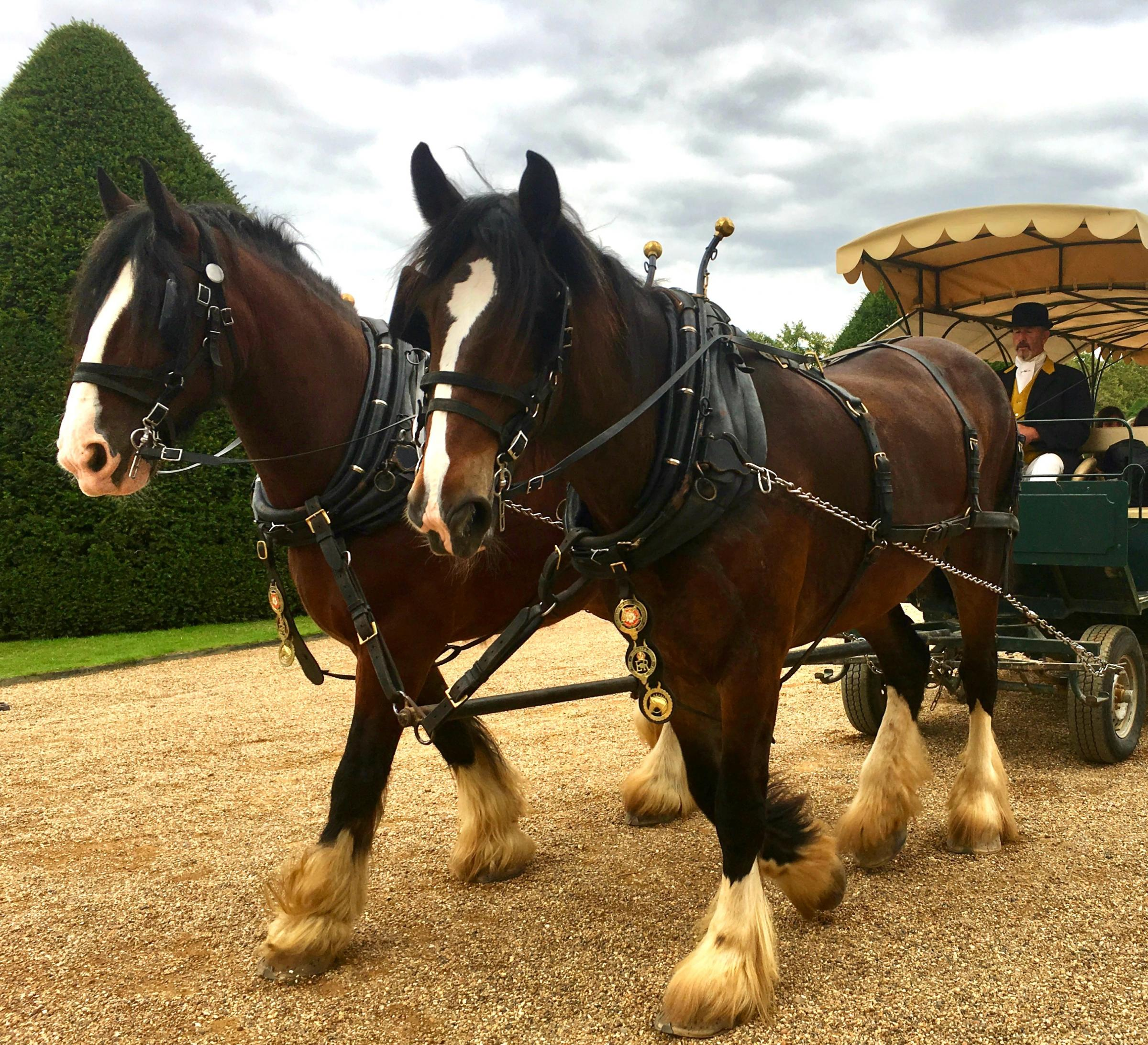 Festive carriage rides at Morden Hall Park NT