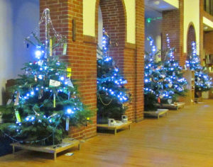 Open Afternoon- Christmas Tree Viewing