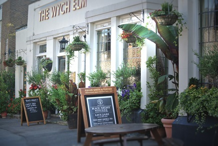 The Wych Elm in Kingston (Credit: Charlotte Salaman)