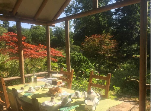 Tea in the Japanese Garden  at Gatton Park